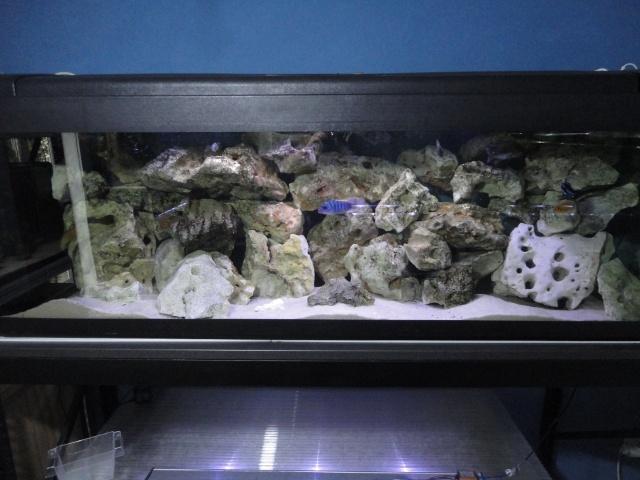 Fischroom Manu  - Page 5 Dsc09826