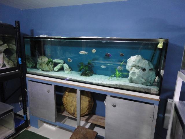 Fischroom Manu  - Page 5 Dsc09832