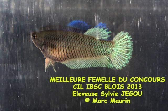 Blois 2013 Bos_fe12