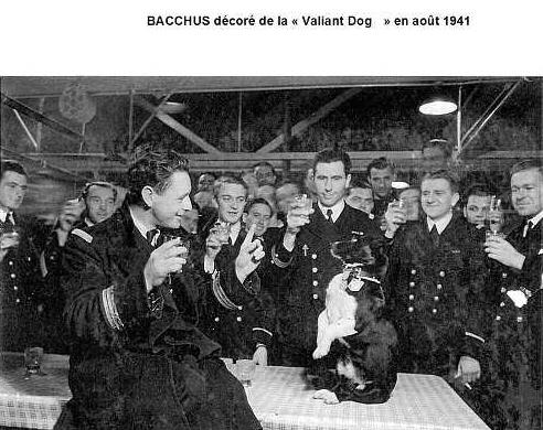"""""""Bètes de guerre """" - Page 5 Chien110"""