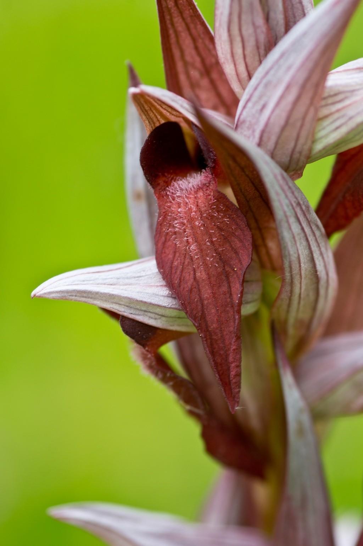 Orchidée sauvage - Page 2 Dsc08011