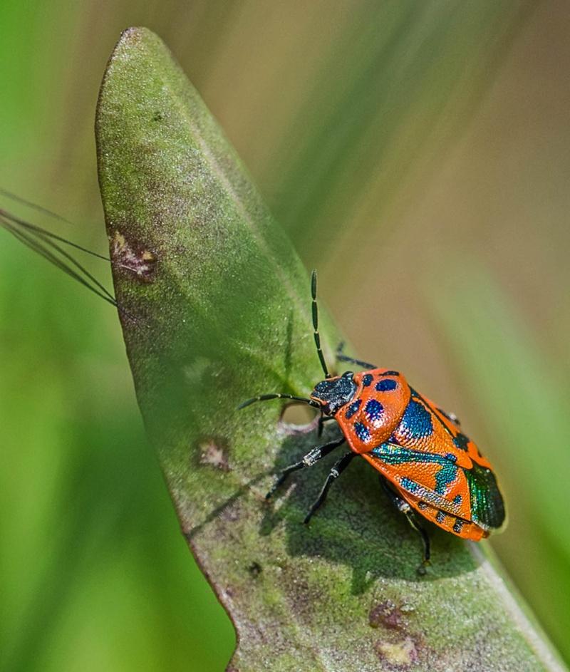 Macro insectes Indulgent (Sigma 105 mm f/2.8) - Page 2 Dsc_1410