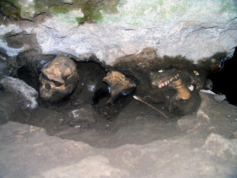 Crâne de Dmanisi Cranes10