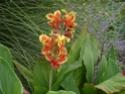 photo fleurs Dsc00519