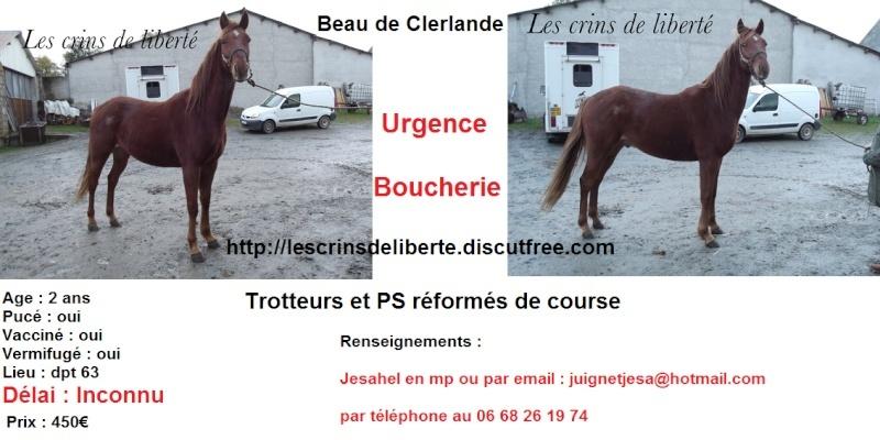 Vénus de Roche (2012) et Beau de Clerlande (2014)  sauvés par Cédric 60 - Page 31 Beau10