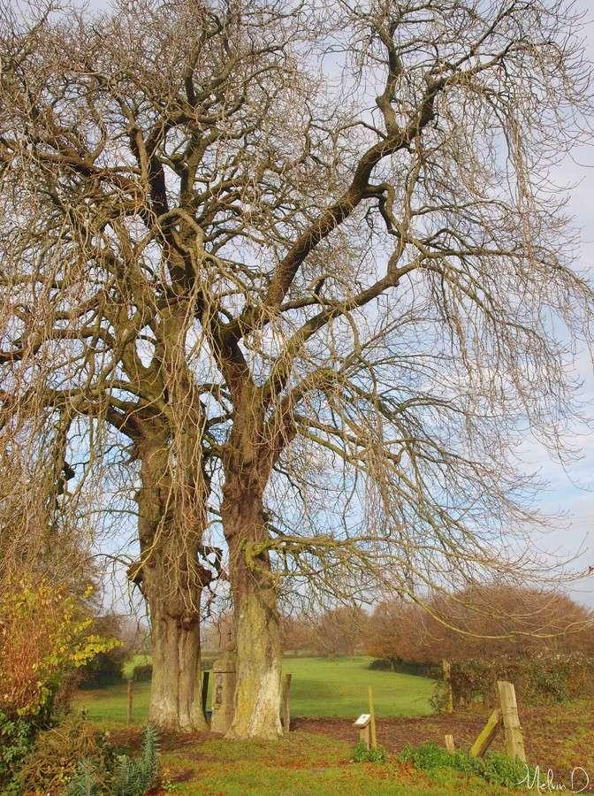 Photos d'arbres! Pb271810