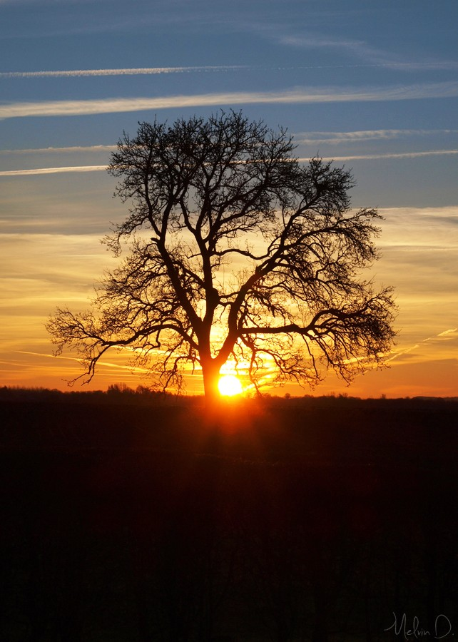 Photos d'arbres! Pc162610