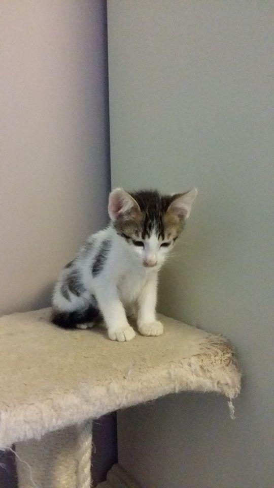 Mya recherche une Famille d'accueil et Jack est à l'adoption ! 10411310