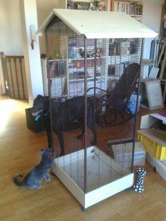 Les cages des petits 13916812