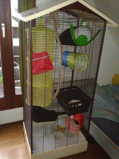 Les cages des petits 13919610