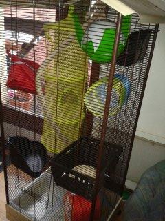 Les cages des petits 13919612