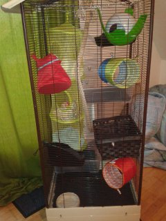 Les cages des petits 13924710