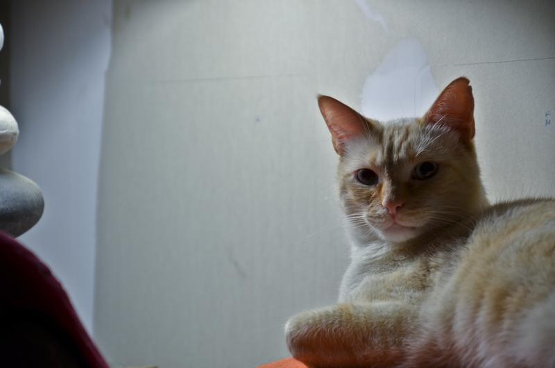 *** spécial *** photos de nos animaux *** - Page 13 Dsc_3012