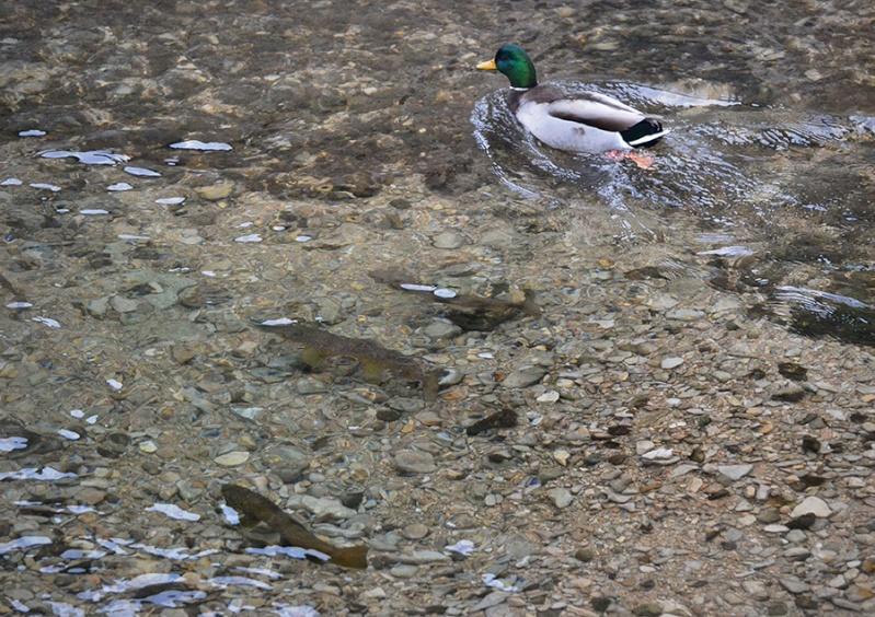 Essais en seche au cul de canard 05210