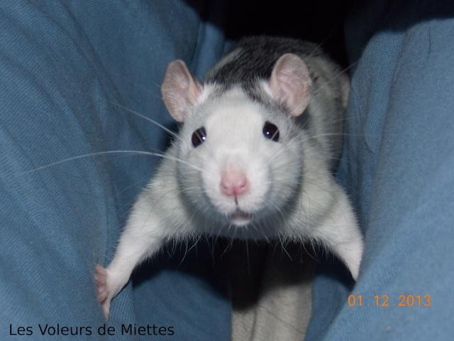 [Site sur les animaux] Les Voleurs de Miettes - Page 5 Dscn1210