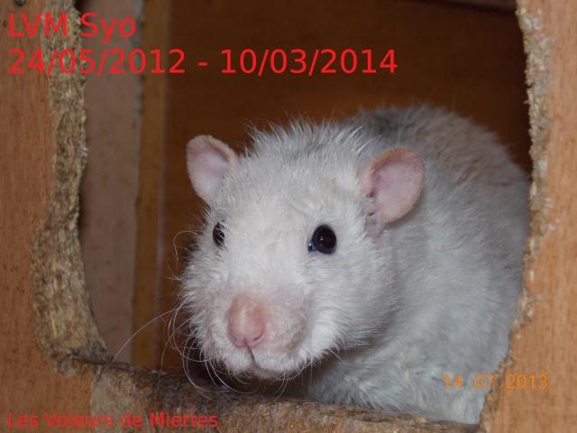 [Site sur les animaux] Les Voleurs de Miettes - Page 6 Dscn8710