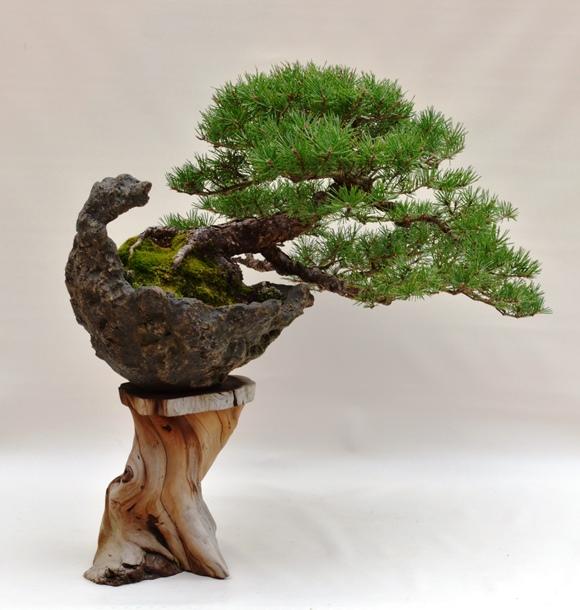 Nursery trash bonsai P_virg10