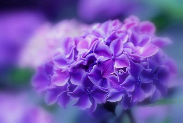 Những cánh hoa mong manh 1309_210