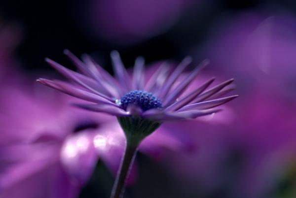 Những cánh hoa mong manh 1962_210