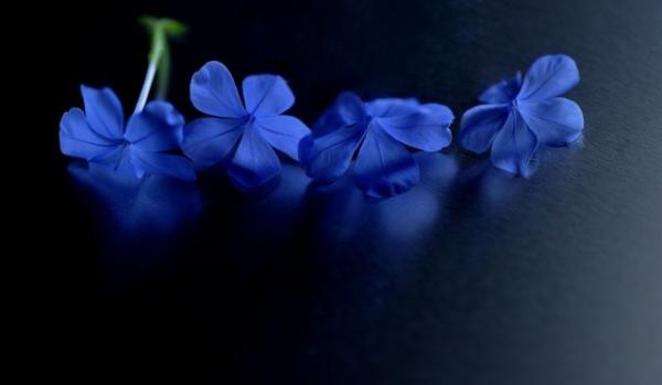 Những cánh hoa mong manh 20625_10