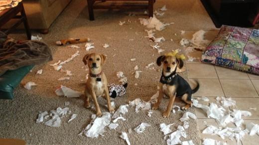 Biệt tài 'xin lỗi' của những chú chó 22670_10