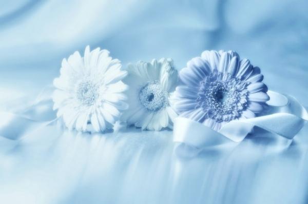 Những cánh hoa mong manh 3267_210