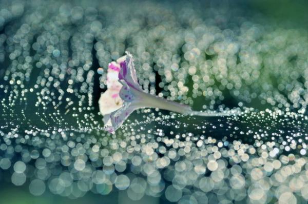 Những cánh hoa mong manh 34278_10