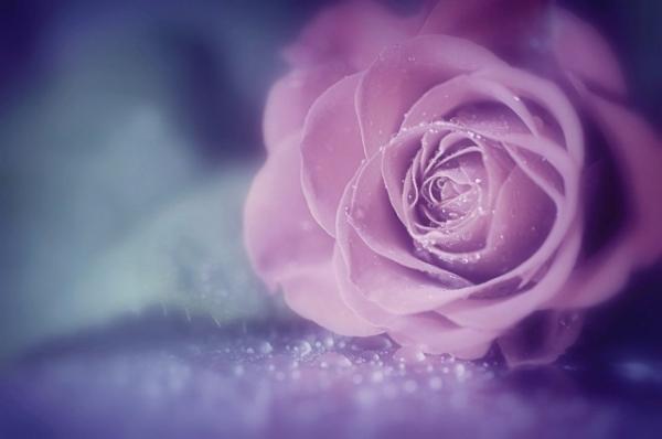 Những cánh hoa mong manh 41188_10