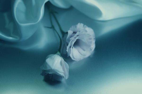 Những cánh hoa mong manh 43097_10