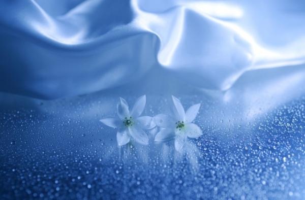 Những cánh hoa mong manh 43749_10
