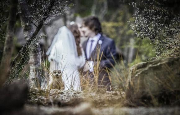 Những đám cưới 'nhớ đời' 457c0910