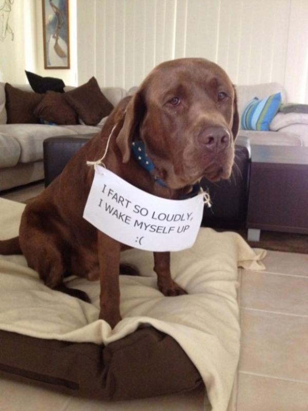 Biệt tài 'xin lỗi' của những chú chó 64506_10