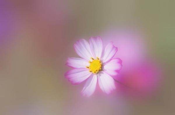 Những cánh hoa mong manh 64573_10