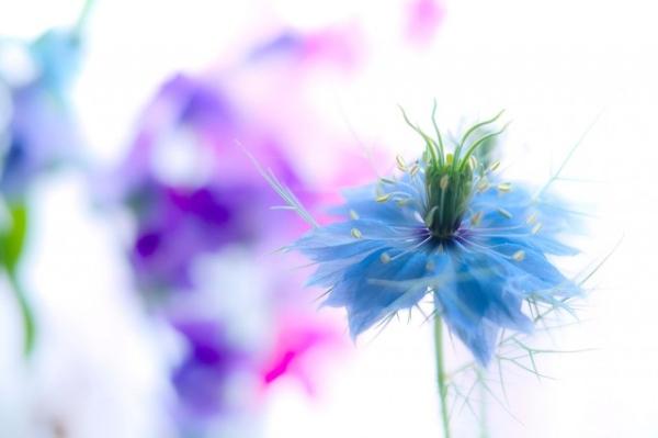 Những cánh hoa mong manh 66733_10
