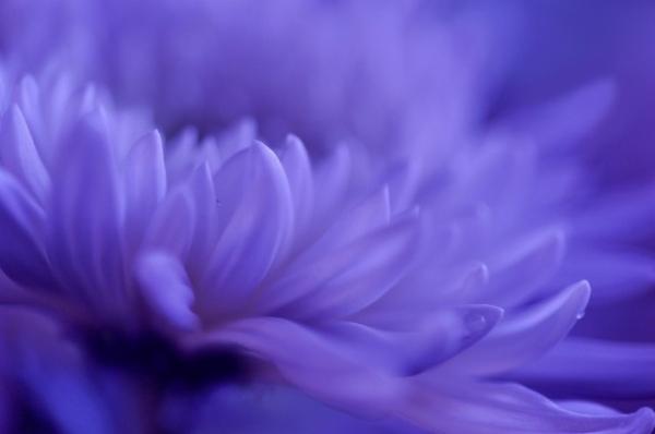 Những cánh hoa mong manh 74135_10