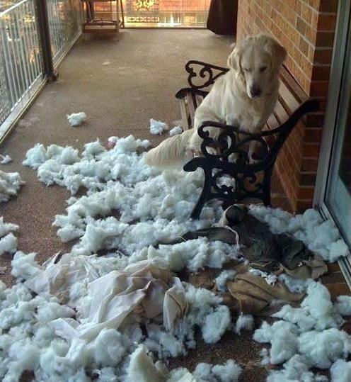 Biệt tài 'xin lỗi' của những chú chó 76202_10