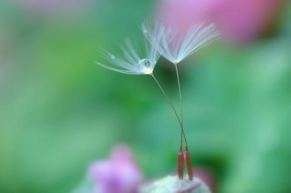 Những cánh hoa mong manh 77720_10