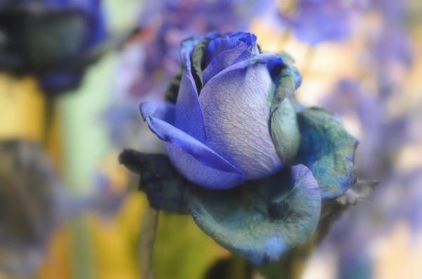 Những cánh hoa mong manh 79025_10