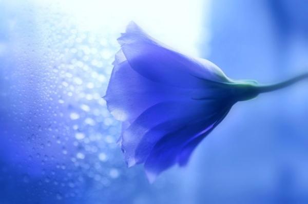 Những cánh hoa mong manh 81137_10
