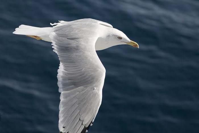 Chim  Beauti18