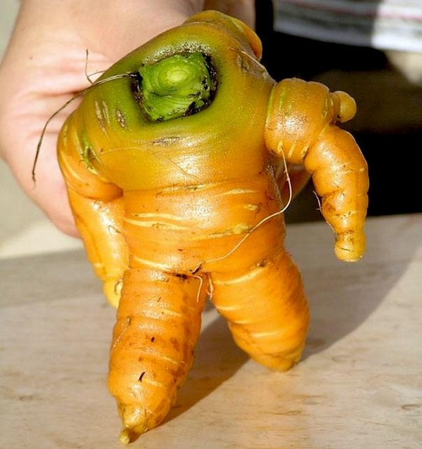 Bộ sưu tập những loại rau củ có hình dạng kỳ lạ  Bo-suu11