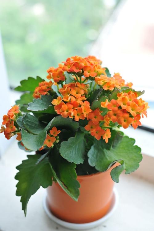 Cắm hoa ngày Tết mang lại may mắn Hoa-so10