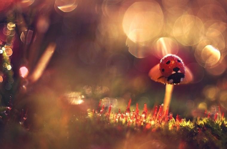 Những hình ảnh macro đẹp Mc9_ro10