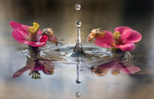 Khoảnh khắc ốc sên tò mò nghịch nước Oc_sen22
