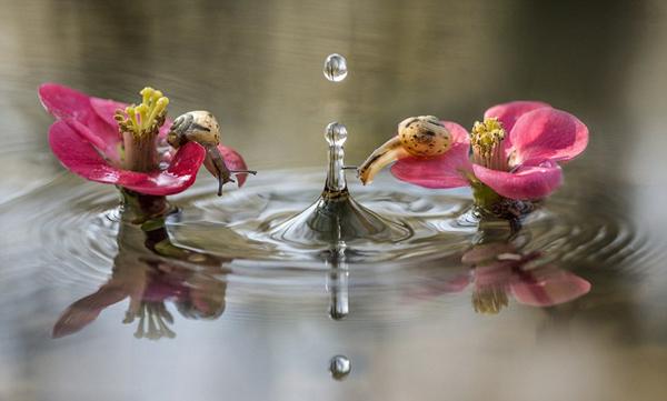 Khoảnh khắc ốc sên tò mò nghịch nước Oc_sen25