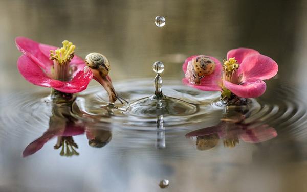 Khoảnh khắc ốc sên tò mò nghịch nước Oc_sen27