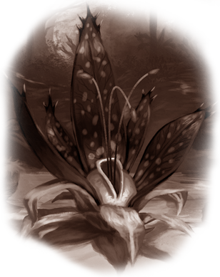 Herbier de Forêstrange Tarten11
