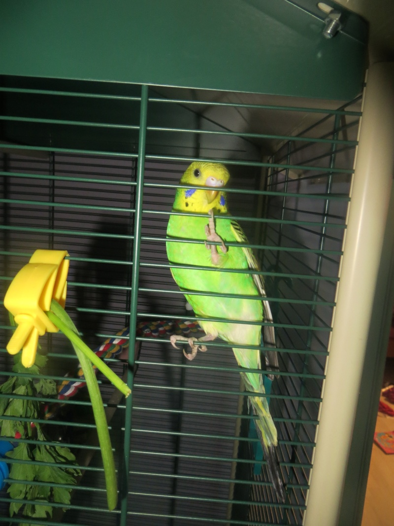 Petit Oiseau, Piwi, Plum & Toufy. Img_1410