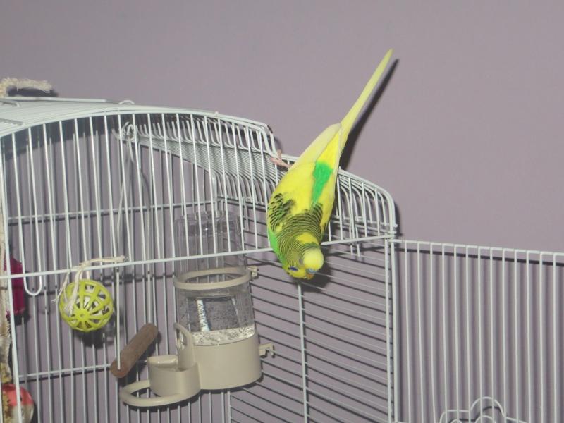 Petit Oiseau, Piwi, Plum & Toufy. Img_1515