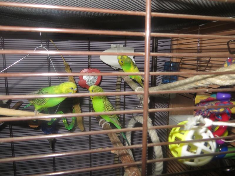 Petit Oiseau, Piwi, Plum & Toufy. Img_1518